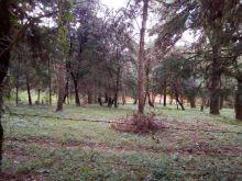 Terreno en el bosque cerca de la reserva