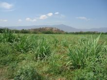 Terreno para rancho ganadero, Siembra, Granja